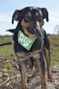 Czaruś - pies do adopcji